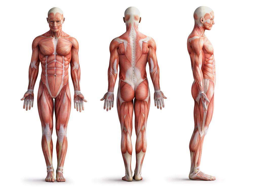 Quanto conosci il corpo umano [QUIZ]?