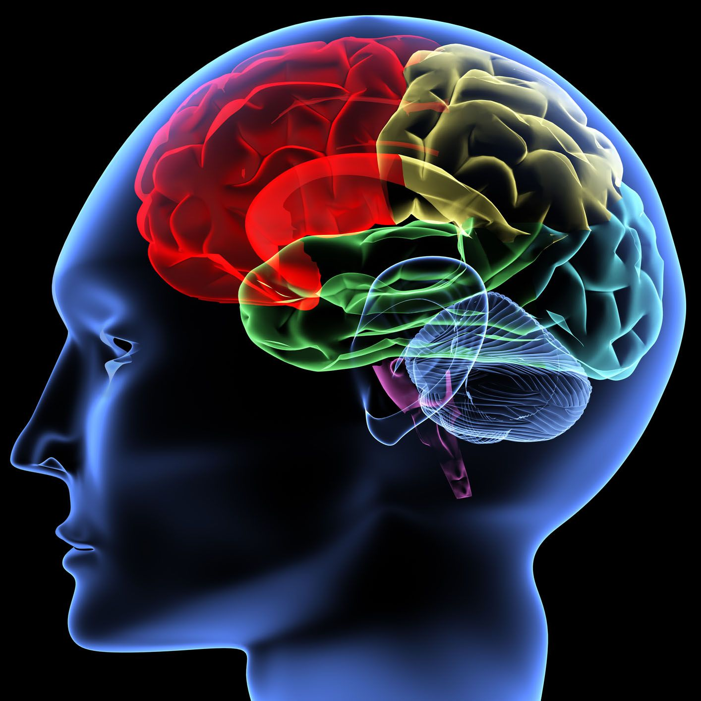 cervello 150x150