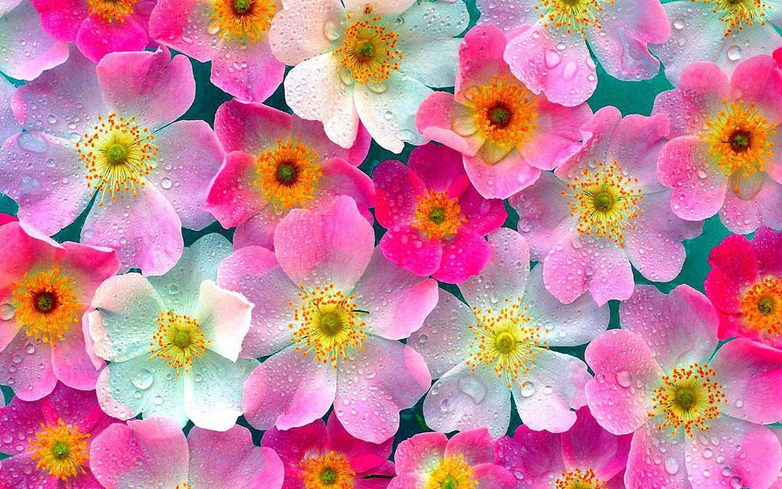 Scopri che fiore sei [TEST]