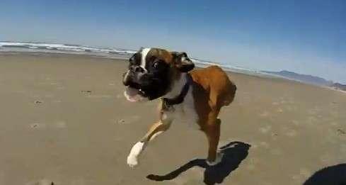 Duncan, cane con due zampe e tanta voglia di vivere