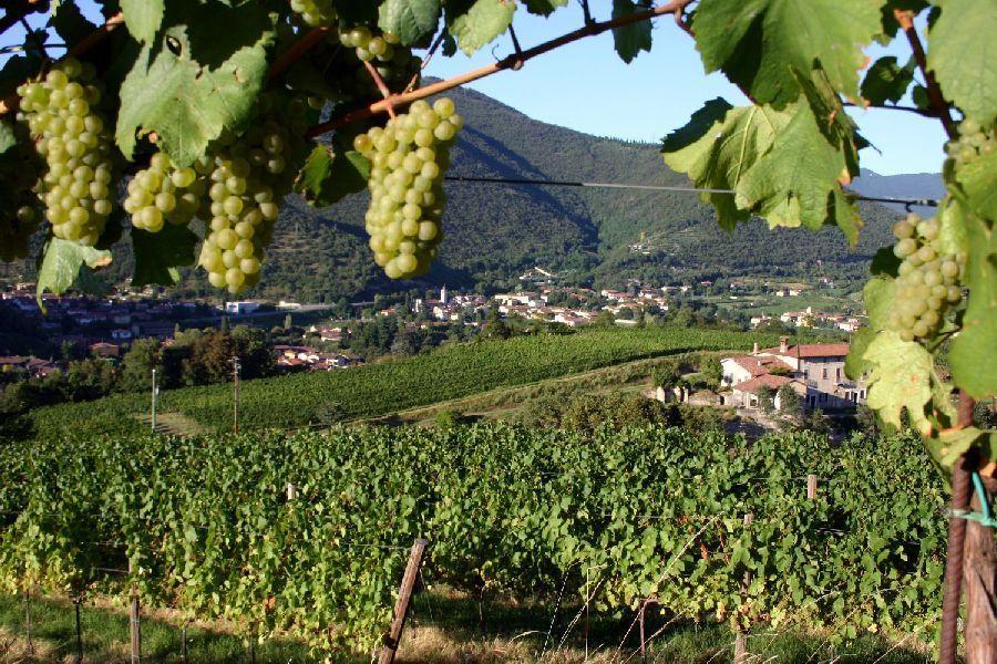 Poderi agricoli in ripresa,  solo per la viticoltura