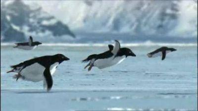 pinguini volanti