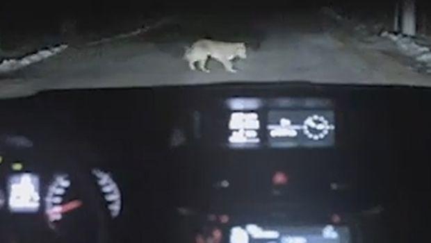 Il cane più furbo del mondo? E' nello spot di Subaru