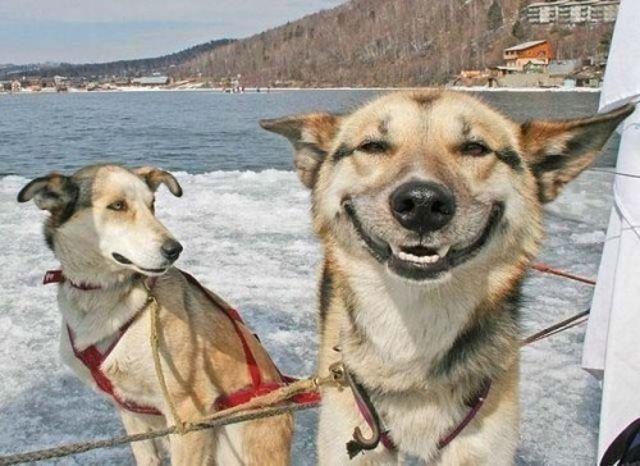 Animali che ridono e sorridono: quanto c'è di vero? Gli animali possono ridere?