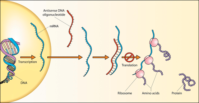 Dal DNA alla proteina