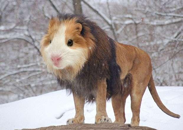 Animali photoshoppati e impossibili creati dai maghi del fotoritocco