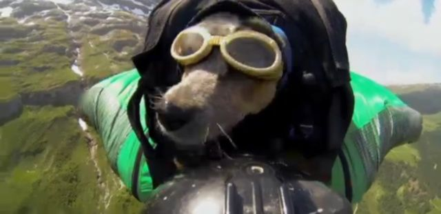 Cane con tuta alare in Svizzera: polemiche degli animalisti