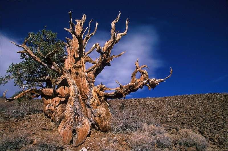 Alberi più strani del mondo: le bizzarrie della Natura