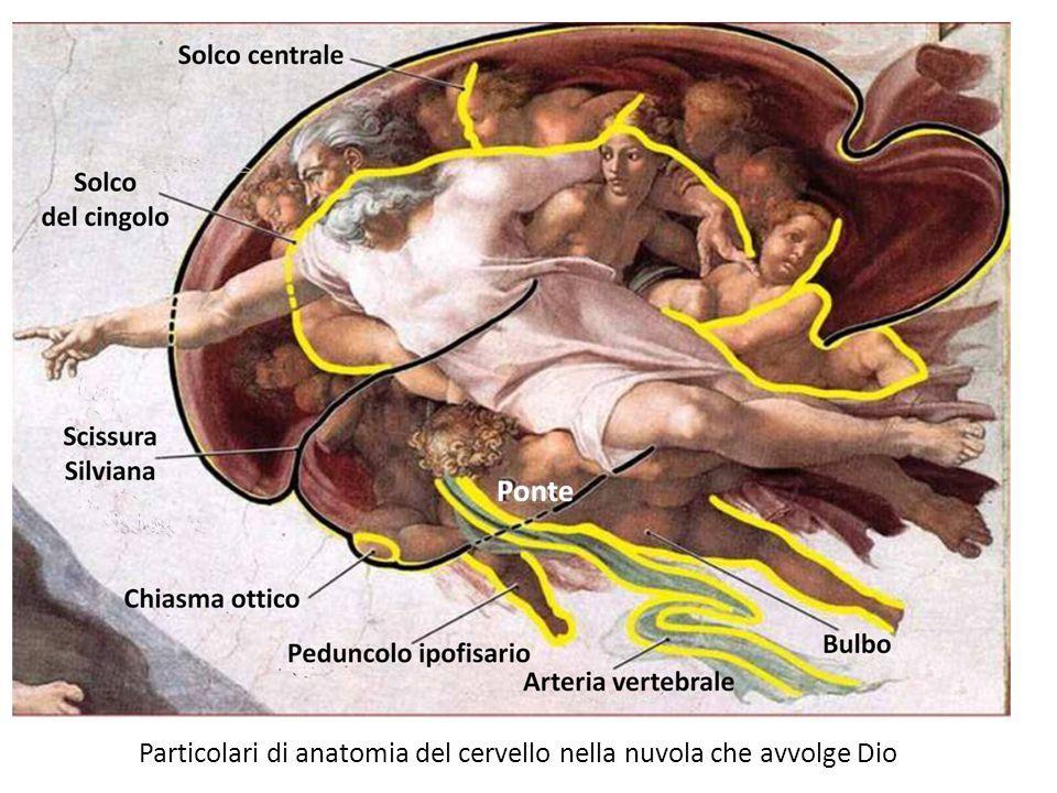 Il Dio cervello di Michelangelo