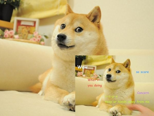 Shiba Inu Doge