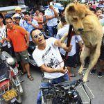 Festival di Yulin in Cina: migliaia di cani uccisi e venduti ai ristoranti