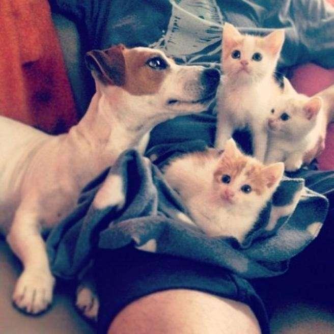 Peppo, cane che ha adottato alcuni gattini randagi