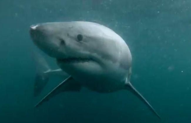 Si tuffa in acqua e incontra uno squalo