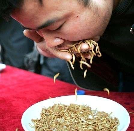 assaggiatore di vermi