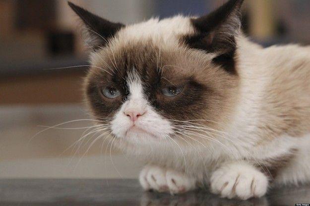 gatto infastidito