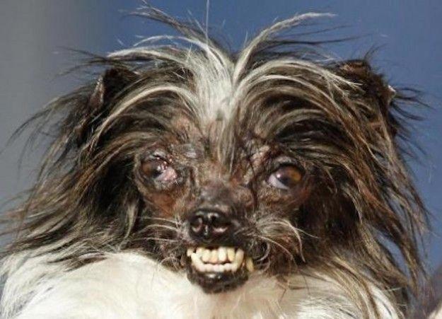 il cane piu brutto del mondo