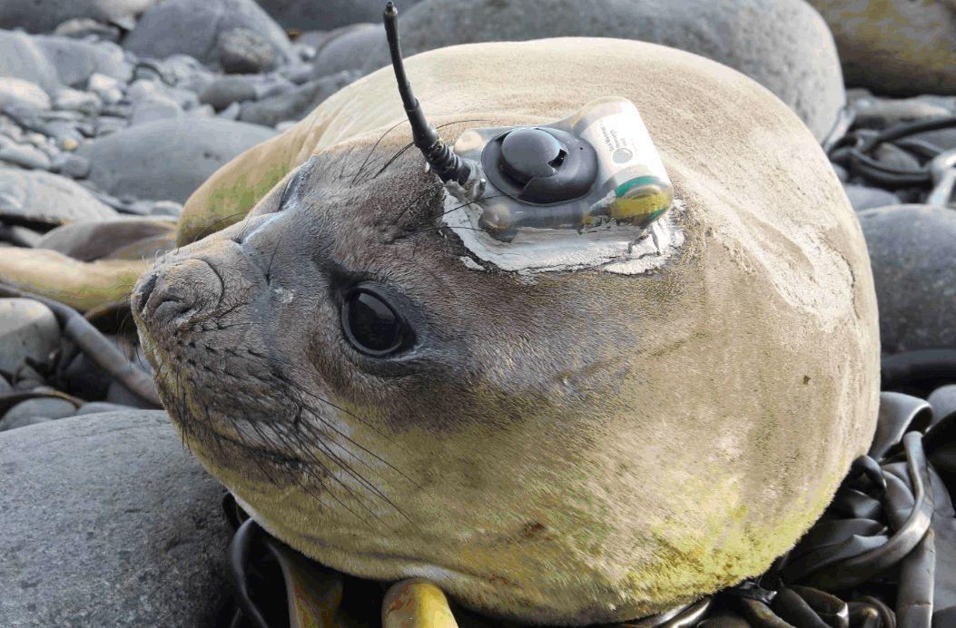 Leone marino Selso liberato in Sud Africa
