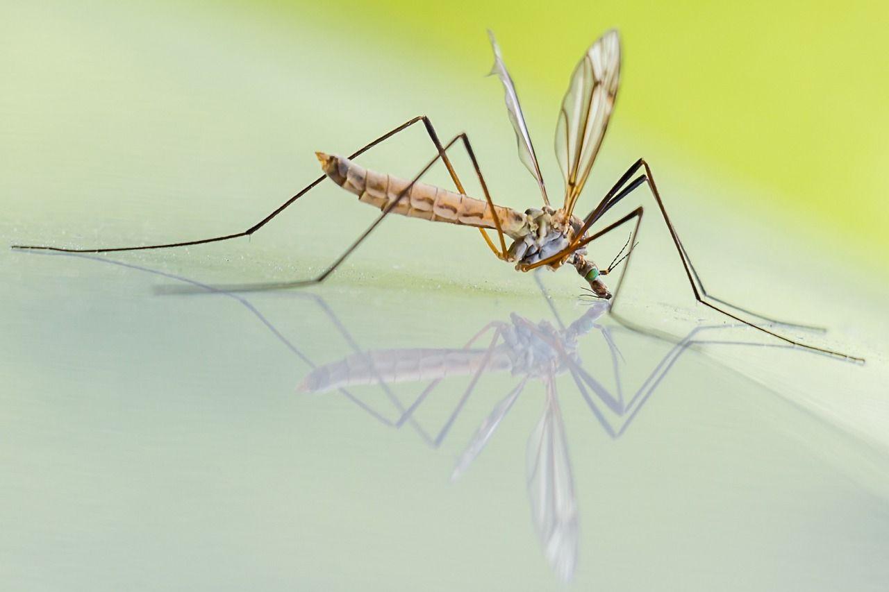 Zanzare: i rimedi naturali contro le punture