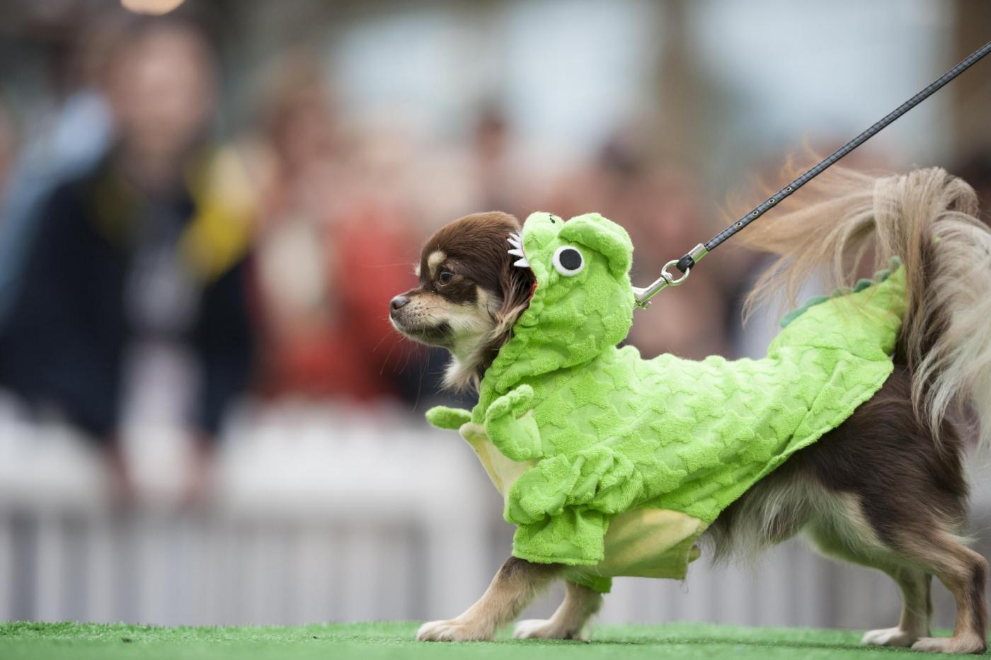 Sfilata di moda per cani a Londra per beneficenza