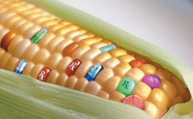 Quanto conosci gli OGM? [QUIZ]