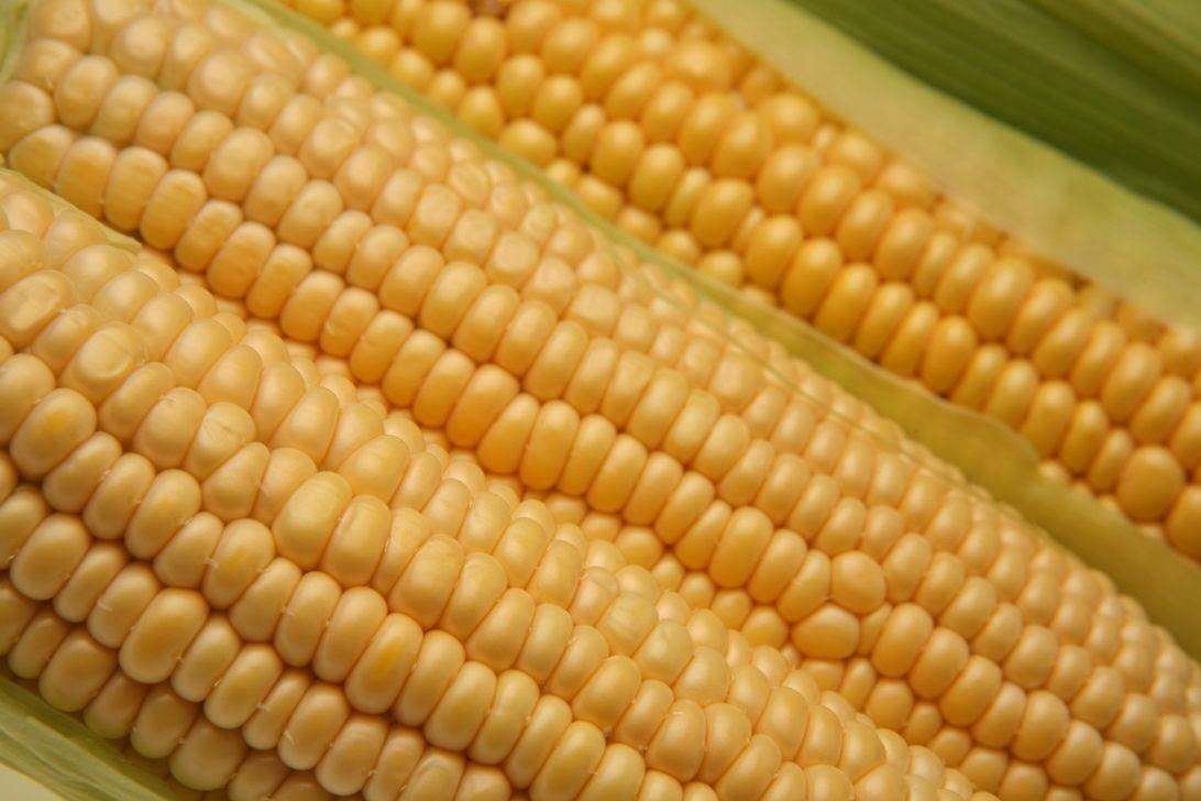 OGM, cosa sono: tutti i pro e i contro