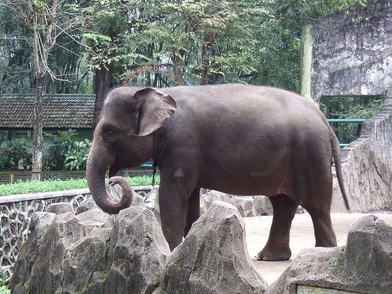 Strage di elefanti a Sumatra: disturbano le coltivazioni locali