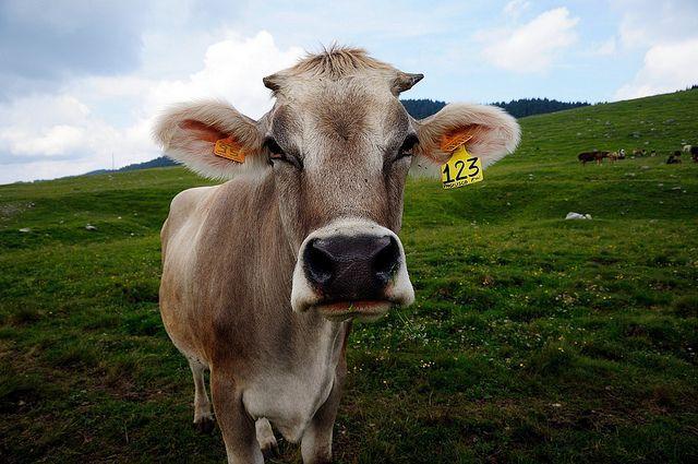 Settimana mondiale per l'abolizione della carne: veg il 7,1% degli italiani