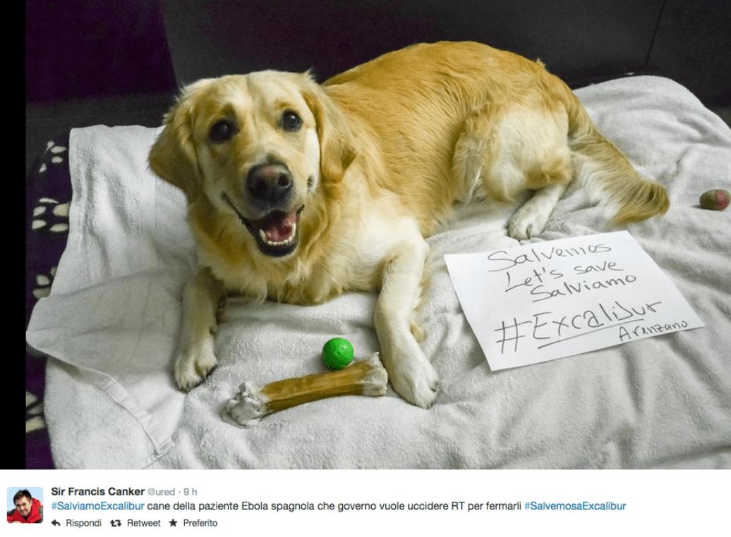 #SalvemosExcalibur: la petizione per salvare il cane dell'infermiera contagiata dall'Ebola