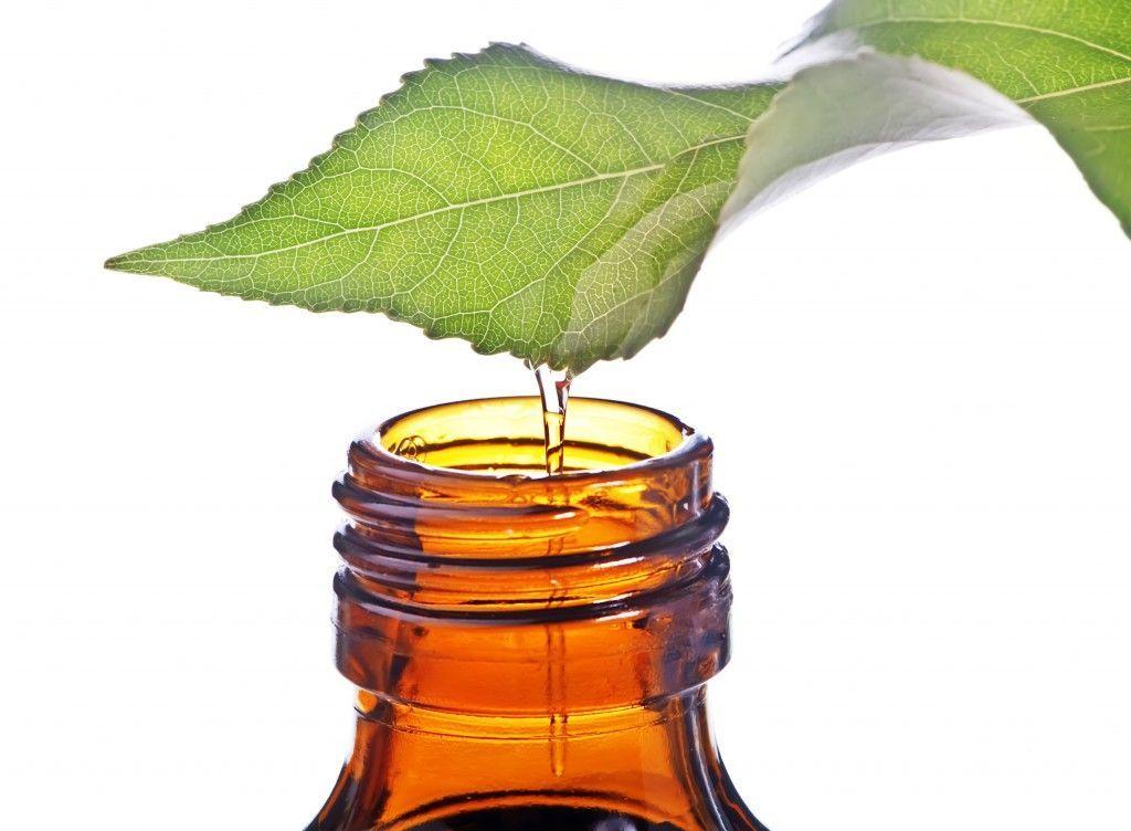 Tea tree oil o olio di melaleuca: proprietà e benefici