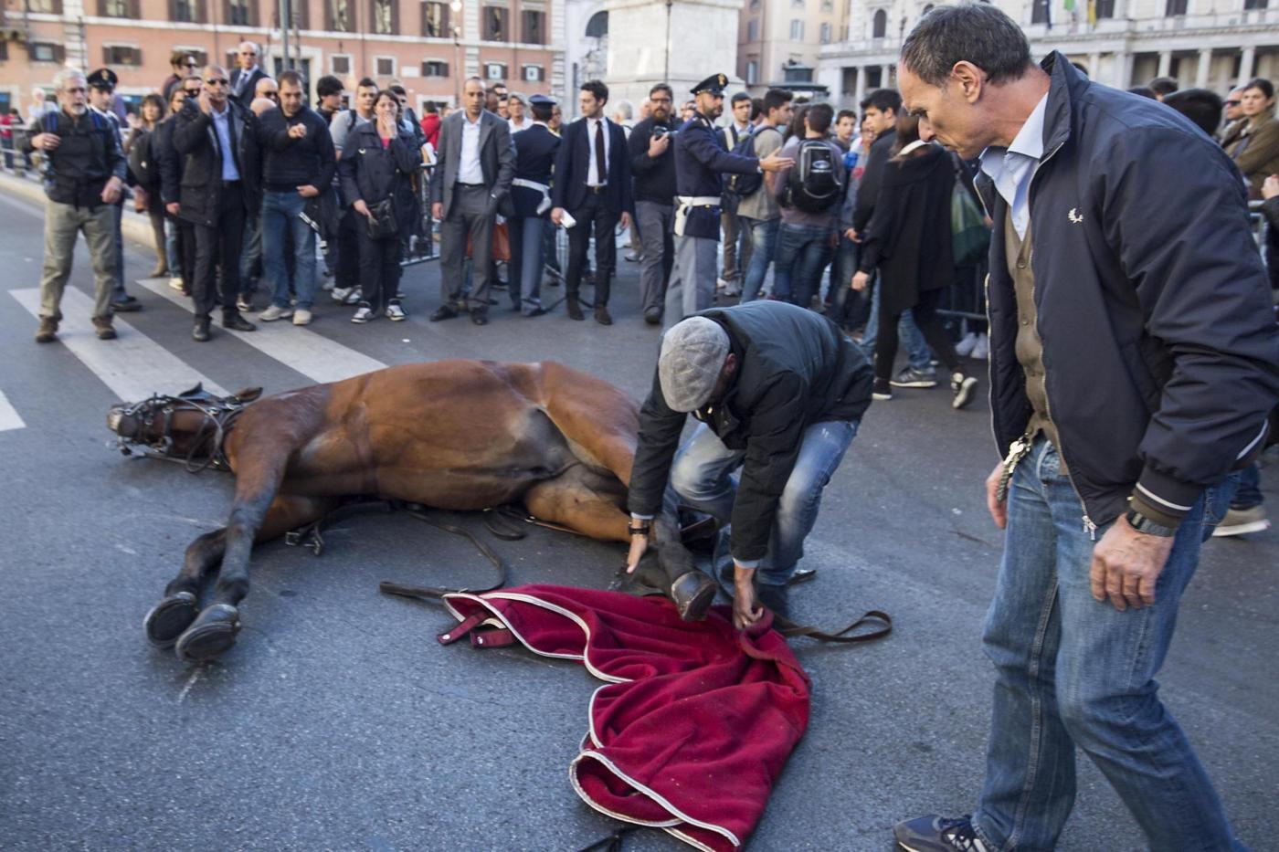 Botticelle a Roma, cavallo stramazza al suolo a largo Chighi