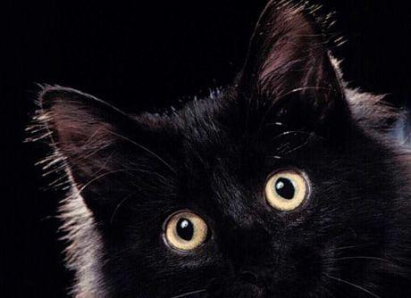 gatto nero scaramanzia venerdi 13 17