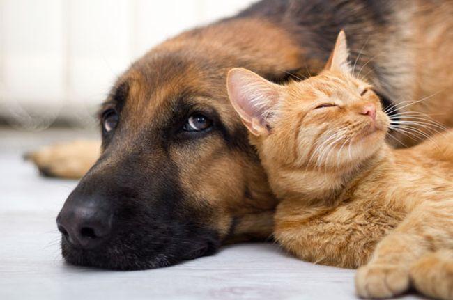 Quale animale domestico vorresti in casa? [TEST]