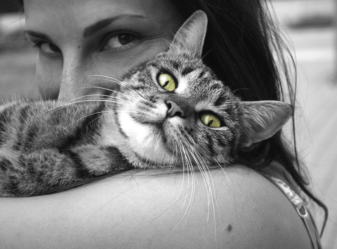 Gatti coccole