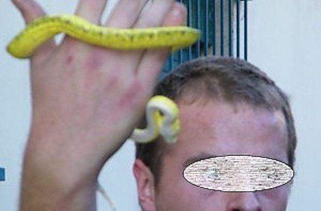 Un serpente sorvegliava la droga: l'ingegno dei narcotrafficanti