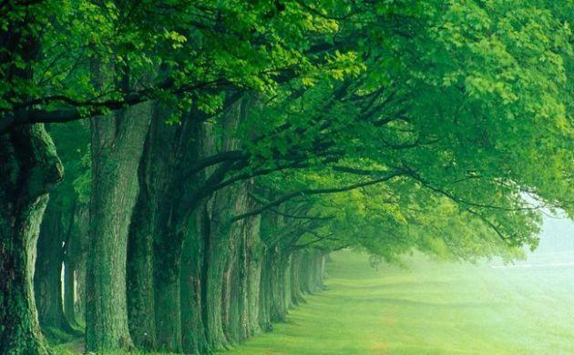 Quale albero ti rappresenta? [TEST]