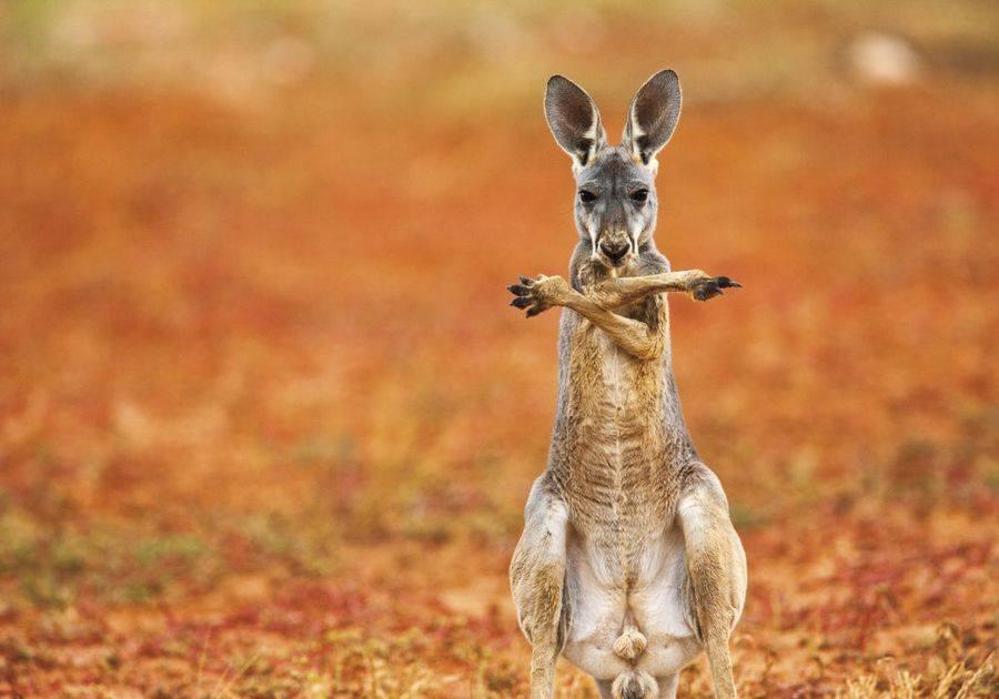 Animali in pose divertenti: le foto più belle