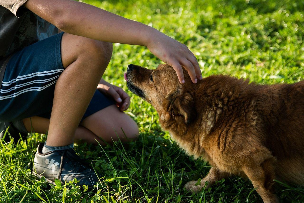 Carezze ai cani (2)