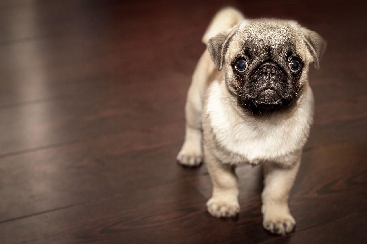 10 cose che i cani non sopportano