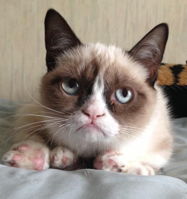 Grumpy Cat, meme cinica e milionaria