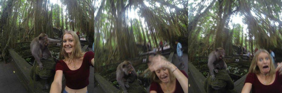 Selfie con scimmia finisce male