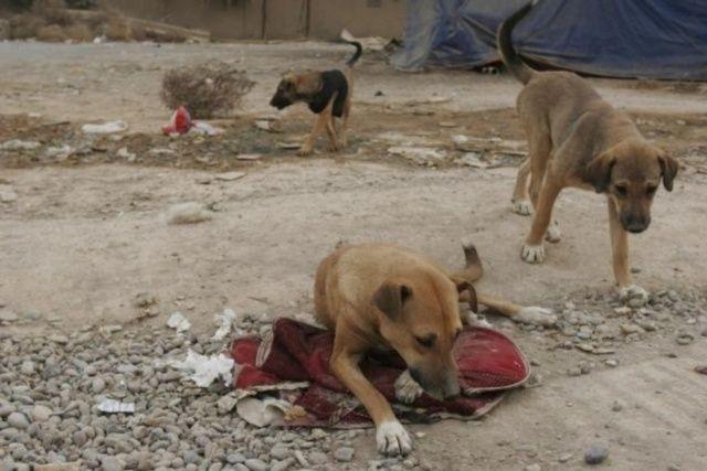 Cani e gatti randagi, emergenza freddo per un milione di esemplari