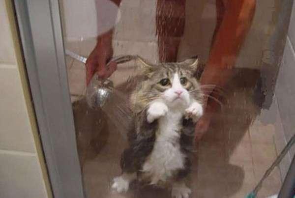 Animali domestici e il bagno: le reazioni non sono felici