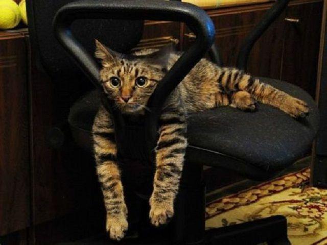 Coccolare gatti in ufficio aumenta la produttività