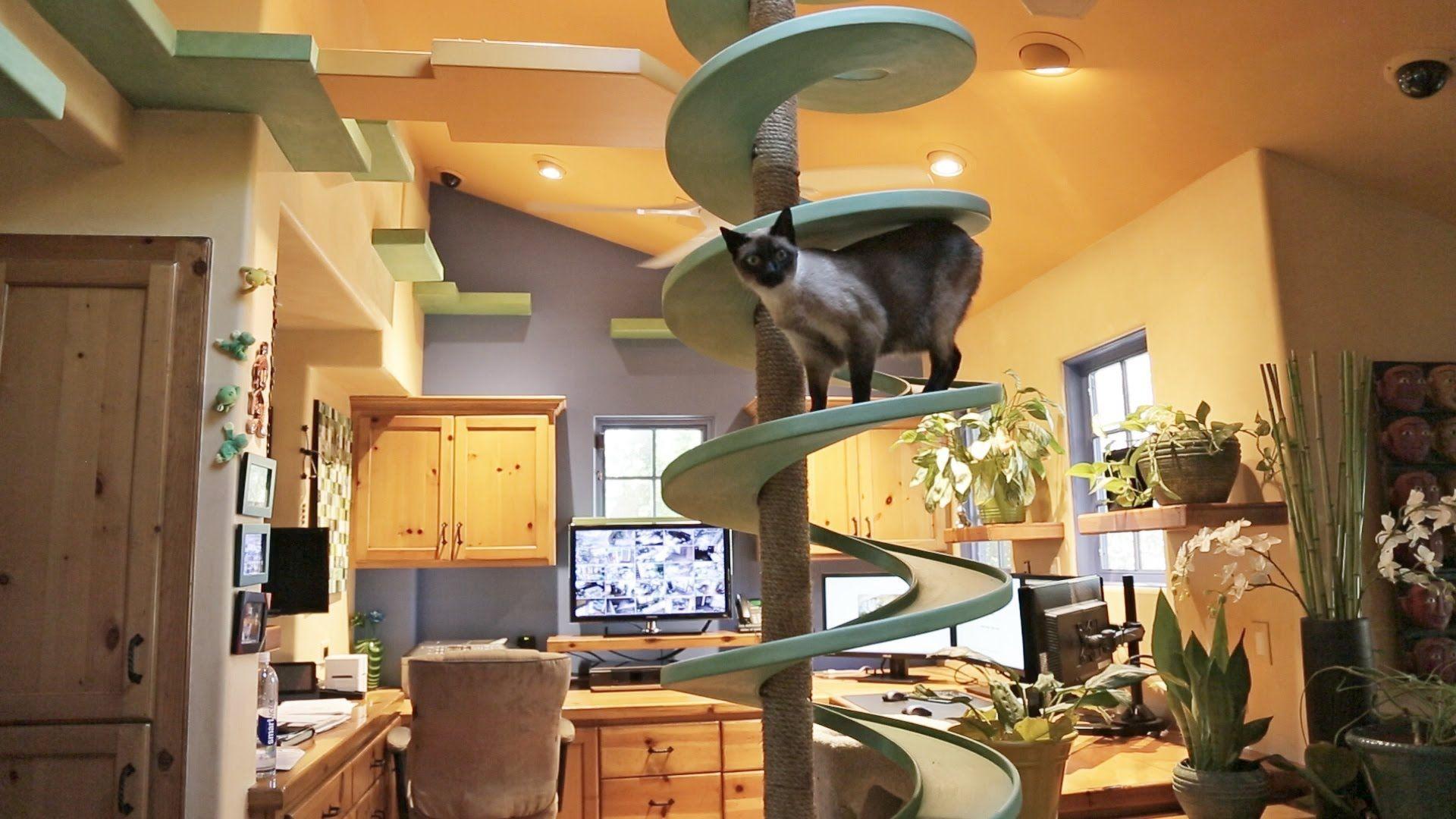 Un paradiso per gatti: Peter Cohen trasforma la sua casa in un parco giochi per felini