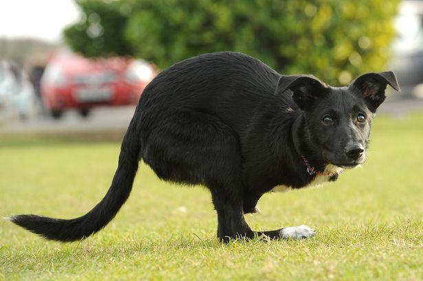 Roo, il cane a due zampe che si crede un canguro