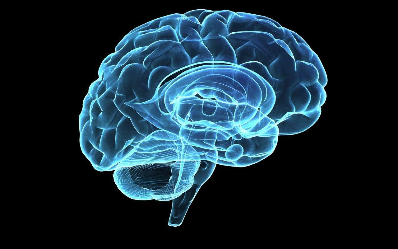 Che emisfero del cervello sei? [TEST]