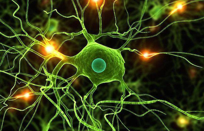 L'interruttore delle paure: scoperto il circuito del cervello che scatena le fobie