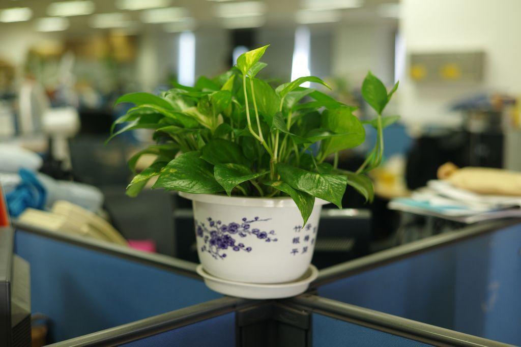 Piante in ufficio: il verde aumenta la produttività