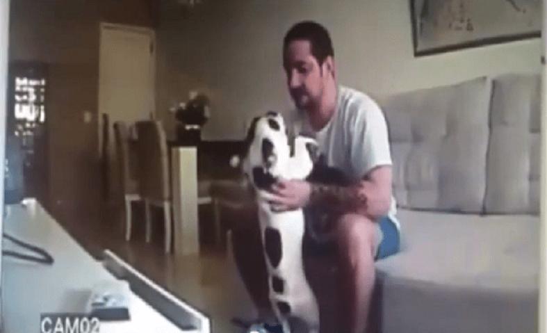 Mette una telecamera in casa e scopre che il fidanzato maltratta il cane
