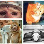 La sperimentazione animale è ancora valida? L'intervista a Massimo Tettamanti